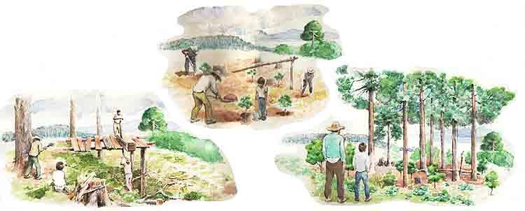 Campesino sembrando un arbol en caricatura imagui for Como talar un arbol