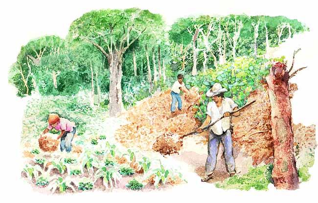 Trabajando de misionera - 3 part 5