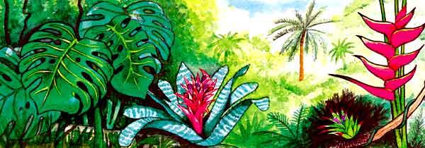 las plantas pueden vivir en cualquier clima Por eso, en cada lugar