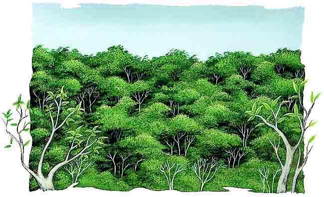 La selva for Arboles que no se le caen las hojas en invierno